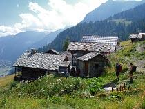 Alpenzu Picollo