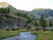 An der Alpe di Tzere