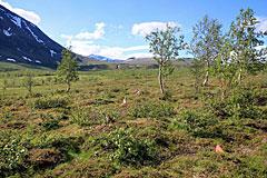 Abzweigung zum Pass zwischen Sjnjuvtjudis und Áhkka
