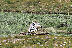 Verfallene Kote am Ufer des Råtokjåkkå