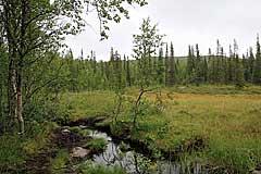 Moorgebiet oberhalb des Stuor Dáhtá